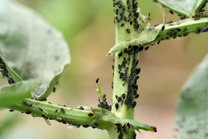 common non toxic garden pest control methods be a master gardener