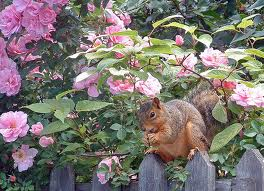 How to keep squirrels away from your garden be a master - How to keep squirrels from digging in garden ...